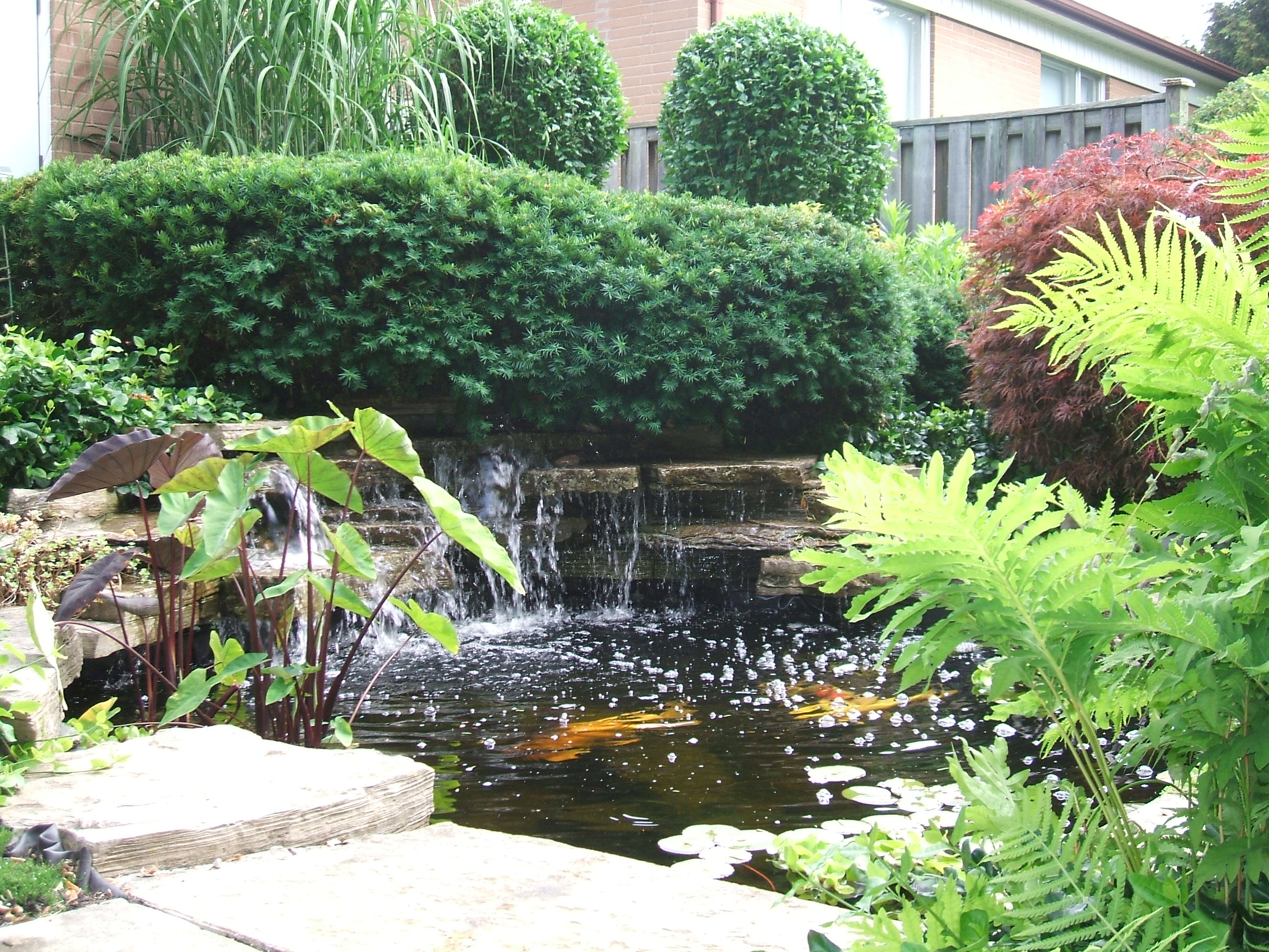 A safe simple way to prepare your backyard pond koi and for Best goldfish for outdoor pond